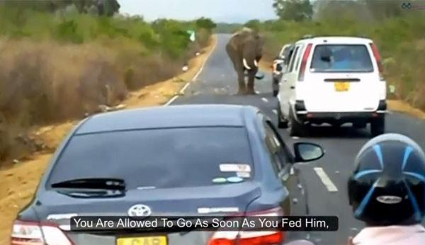 Animal só liberava a estrada após receber comida dos motoristas (Foto: Reprodução/YouTube/Bend Eye TV)