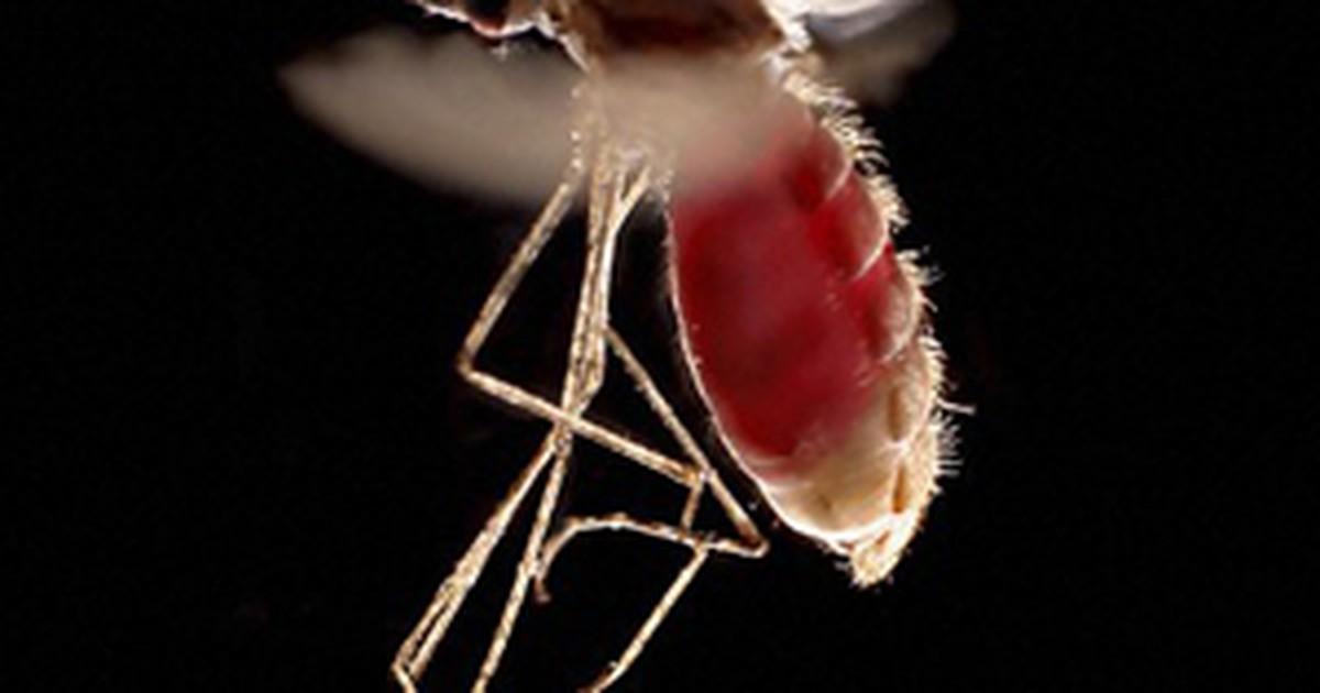 Nova substância pode combater malária com dose avaliada em US$ 1
