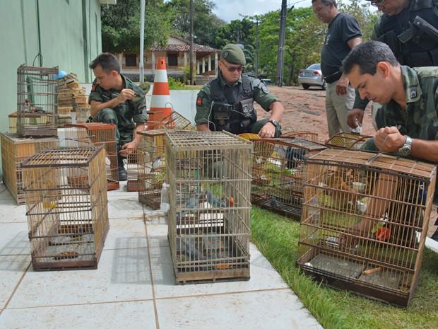 Cerca de 80 aves foram recuperadas neste sábado (Foto: Walter Paparazzo/G1)