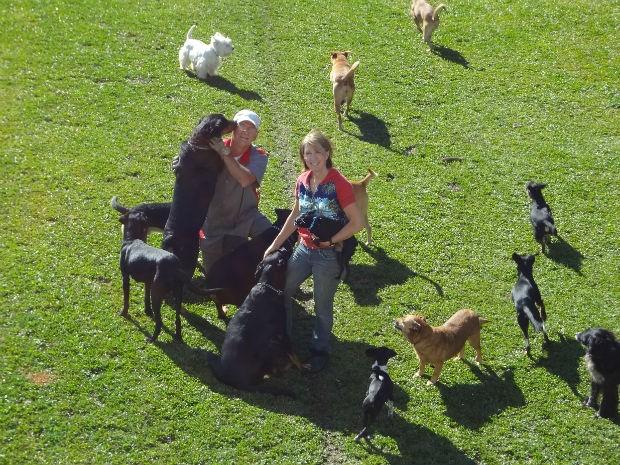Atualmente o casal concentra cerca de 60 cães recolhidos das ruas de Curitiba e Região (Foto: Adriana Justi / G1)