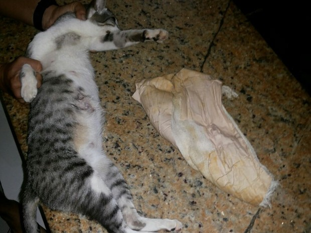 Gato estava envolto com celulares, carregadores e chips (Foto: Marlúcio Azevedo / Arquivo Pessoal)