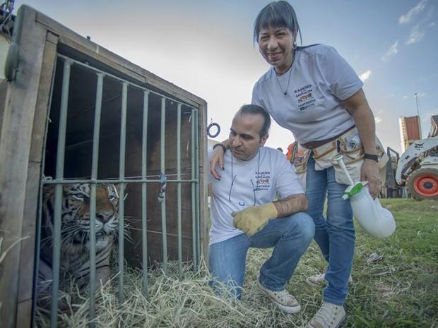 Marcos e Sílvia Pompeu com tigre resgatado de zoológico em Brasília (Foto: Santuário Rancho dos Gnomos/Reprodução)