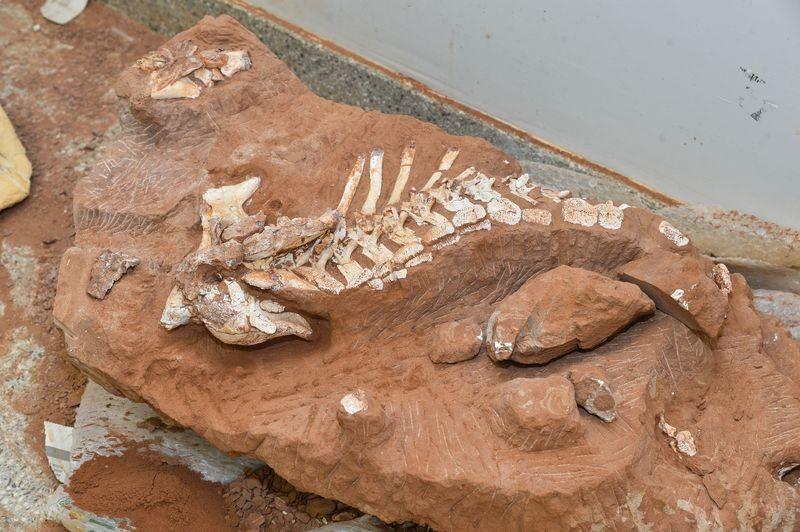 Pesquisadores estudam fóssil de dinossauro que viveu há 70 milhões de anos no Brasil
