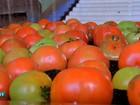 Preço do tomate cai 4% entre janeiro e fevereiro em Cuiabá, diz pesquisa