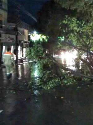 Árvore caiu no sentido bairro da Avenida Getúlio Vargas, no Centro (Foto: Manaustrans/Divulgação)