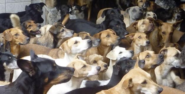 São 300 cachorros de idades e raças variadas que convivem em harmonia (Foto: Isabel Ruliere / Arquivo pessoal)