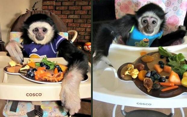 Tratados como crianças, macacos foram roubados de casa em Nebraska (EUA) (Foto: Divulgação/Lee County Sheriff's Office)