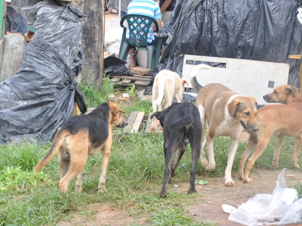 Cães vivem nas ruas de Cruzeiro do Sul (Foto: Francisco Rocha/G1)