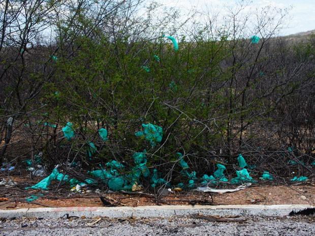 Sacos de lixo se prendem a arbustos em perto de Salgueiro (PE)