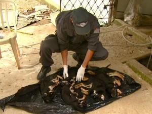 Cães foram encontrados em freezer de ONG, em Campinas (Foto: Reprodução / EPTV)