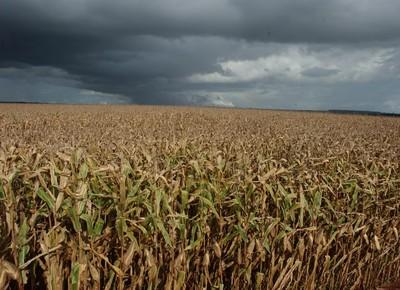 agricultura_milho_ (Foto: Ernesto de Souza/Ed. Globo)