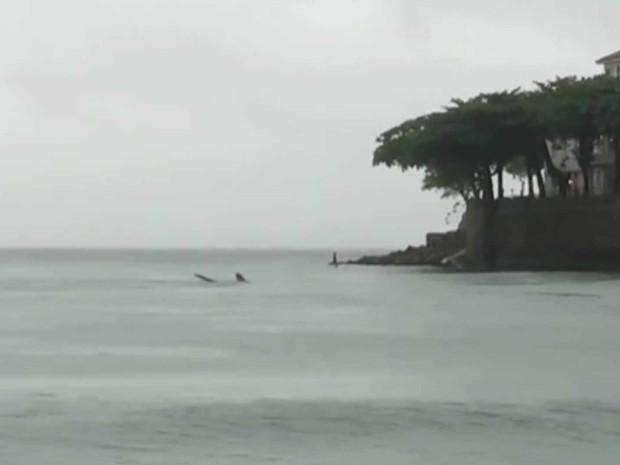 Tubarão atraiu atenção em Copacabana (Foto: Reprodução/TV Globo)