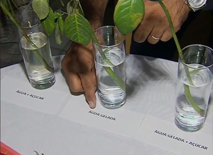 Biólogo compara vários métodos de conservação (Foto: Reprodução/ TV Asa Branca)