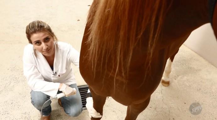 A fisioterapia pode ser um instrumento para recuperar lesões e salvar a vida de cavalos (Foto: reprodução EPTV)