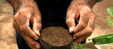 Aprenda a preparar mudas para o plantio utilizando 2 maneiras de preparação (Reprodução/TV Gazeta)