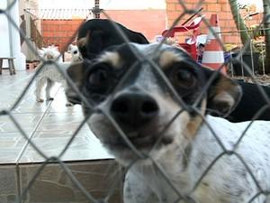 Animais recolhidos da rua em Blumenau vão ser beneficiados (Foto: Reprodução RBS TV)