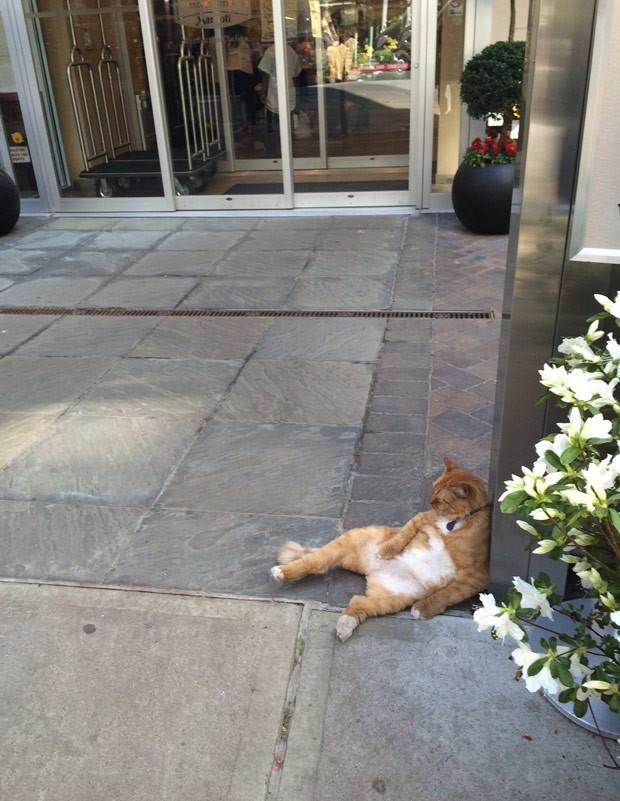 Felino parecia estar de ressaca (Foto: Reprodução/Reddit/TheLoudestMeows)