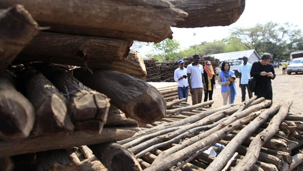 Shigeru Ban projeta 20 mil casa para refugiados no Quênia (Foto: Divulgação)