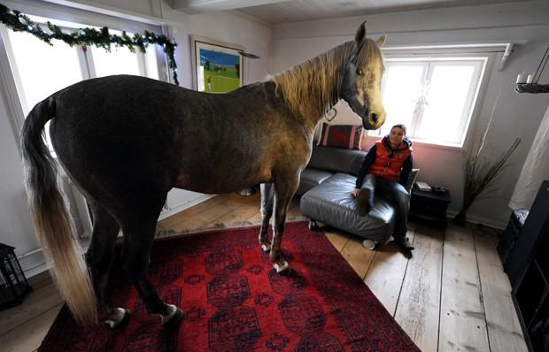 Stephanie Arndt aparece ao lado de seu cavalo árabe 'Nasar' dentro de casa em Holt, na Alemanha (Foto: Carsten Rehder, DPA/AFP)