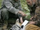 Tigre libertado por Putin teria atacado curral de cabras na China