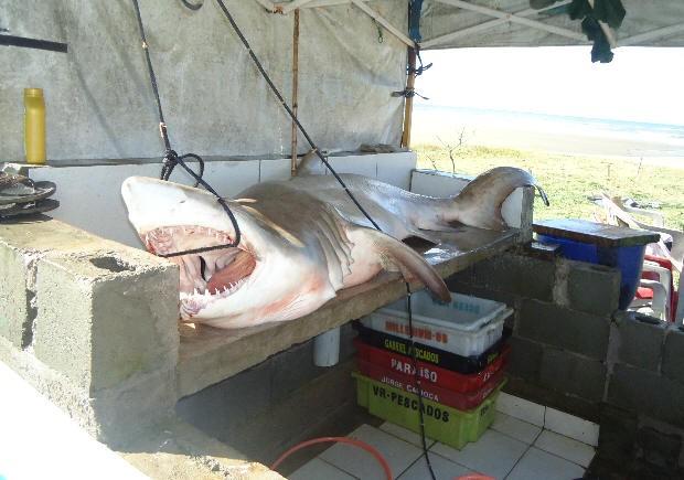 Tubarão é encontrado em Itanhaém (Foto: Arquivo Pessoal)