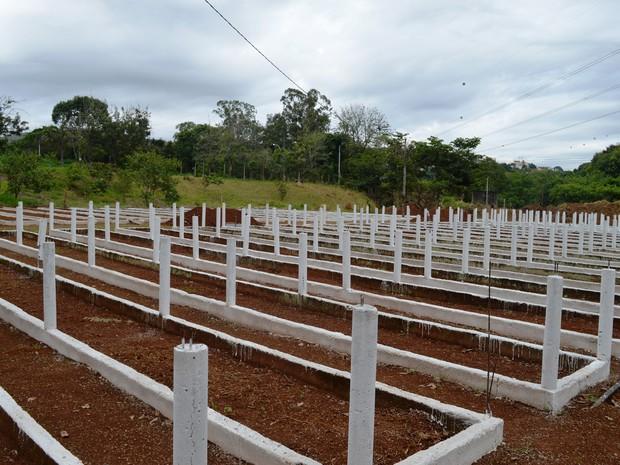 Viveiro para produção de mudas de flores e plantas é instalado em Poços de Caldas (MG) (Foto: Divulgação/Prefeitura Municipal de Poços de Caldas)