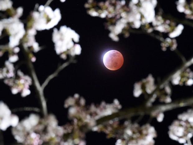 Eclipse lunar total, fenômeno conhecido como 'Lua de sangue', é observado na cidade de Shiraishi, em Miyagi, no Japão, neste sábado (4) (Foto: (AP Photo/Kyodo News)