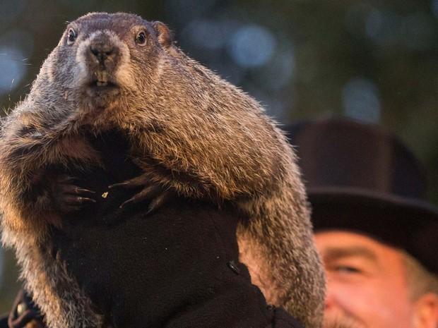 Treinador John Griffiths exibe a marmota Phil nesta terça-feira (2) após o bicho prever primavera antecipada nos Estados Unidos (Foto: Mark Pynes /PennLive.com via AP)