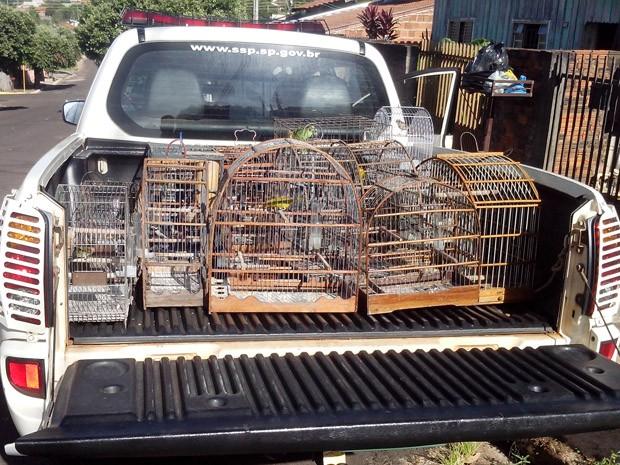 Foram apreendias 11 aves que eram mantidas em cativeiro (Foto: Polícia Ambiental/Cedida)
