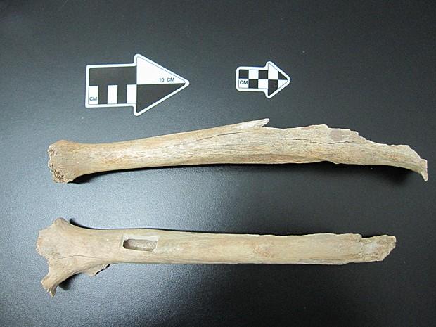 Osso de perna dá indícios sobre origem do homem moderno (Foto: Instituto Max Planck/Divulgação)