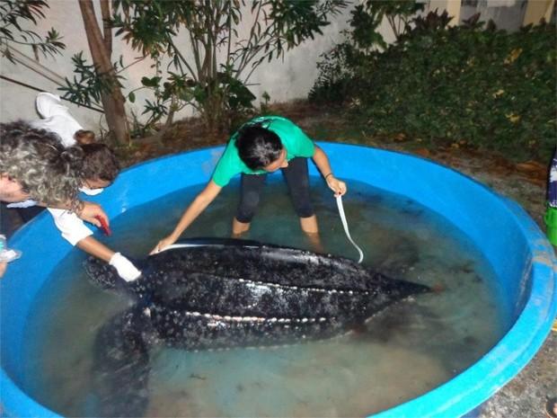 Tartaruga de couro é resgatada pelo Instituto Biota de Conservação (Foto: Divulgação/Biota)