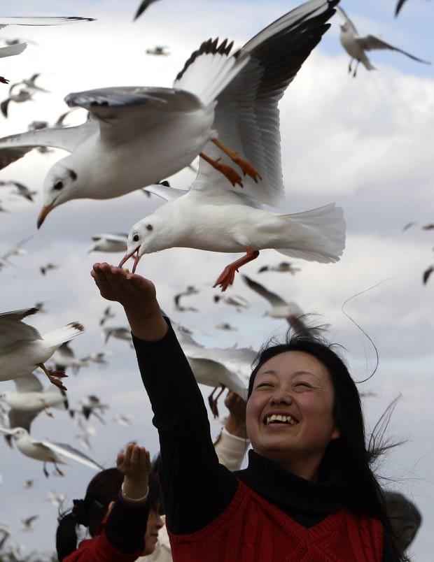 Moradores e turistas alimentam gaivotas no lago Dianchi. (Foto: Jason Lee/Reuters)