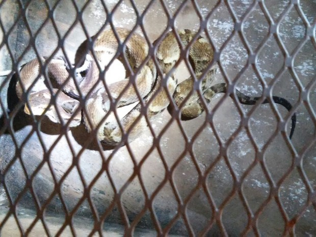 Animal foi levado para a sede da Sedam, em Vilhena (Foto: Corpo de Bombeiros/Divulgação)