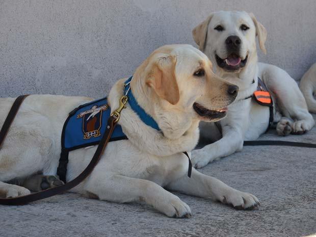 Programa de adestramento foi inspirado em projeto americano (Foto: Serviço Penitenciário Argentino/ BBC)