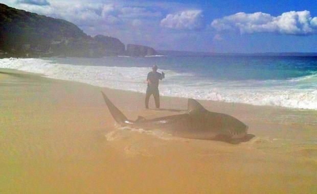 Brendon Hilder fisgou tubarão de 4 metros com linha de mão em praia australiana (Foto: Reprodução/Twitter/Australia Trends)