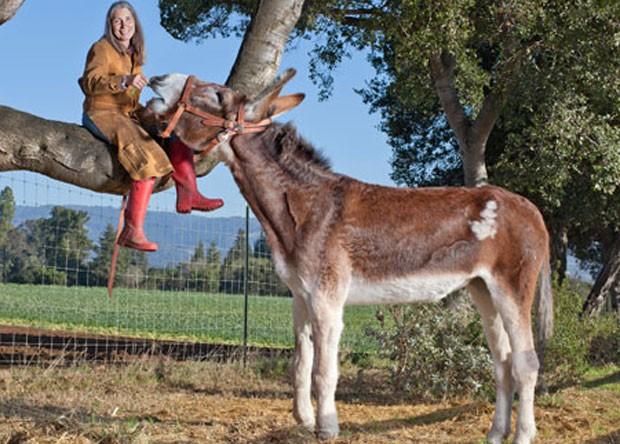 'Oklahoma Sam' entrou para o Guinness como o burro mais alto do mundo.  Ele mede 1,55 metro. O animal vive em uma fazenda em Watsonville, no estado da Califórnia (EUA). (Foto: Reprodução/Guinness)