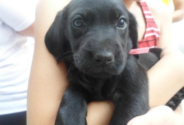 Cachorros adoção (Foto: Divulgação)