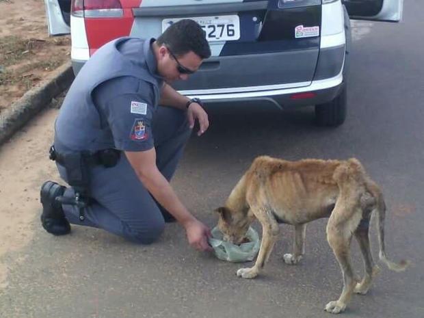 Cachorra alimentava por PM é diagnosticada com Lishmaniose (Foto: Reprodução / Facebook)