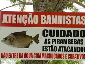 Placa orienta sobre ataques de pirambebas (Foto: TV Integração/Reprodução)