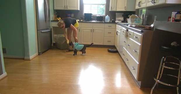 Após encerar a cozinha, bichano recebe recompensa nos Estados Unidos (Foto: Reprodução/YouTube/texasgirly1979)