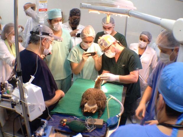 Cirurgia para colocação de novo bico aconteceu em universidade de Santos (Foto: Luis Paes/TV Tribuna)