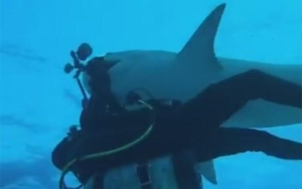 Tubarão-tigre abocanhou câmera subaquática de US$ 10 mil do mergulhador Jim Abernethy (Foto: Reprodução/YouTube/Paul and Young Ron)