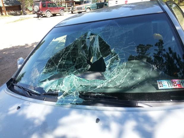 Urso quebrou para-brisa e destruiu parte interna do veículo (Foto: Greg Creasy/AP)