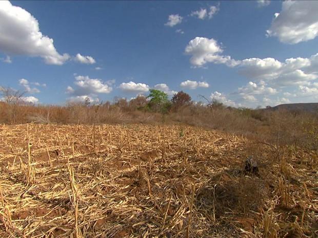 GRU seca afeta famílias no piauí (Foto: TV Globo)