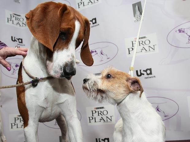 Cães de diferentes raças percebem que são da mesma espécie (Foto: Astrid Stawiarz/Getty Images North America/AFP)