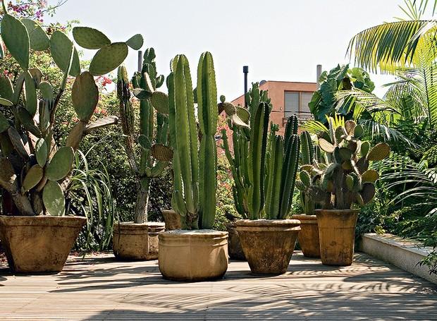 21 Plantas Muito Resistentes Casa E Jardim Paisagismo - Plantas-exterior-resistentes