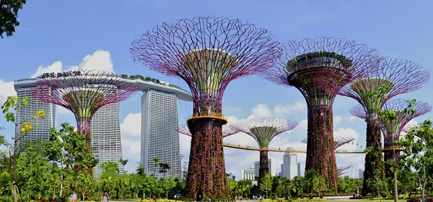 Árvores gigantes no Supertree Grove, bosque artificial em Cingapura (Foto: Divulgação/Gardens by the Bay)