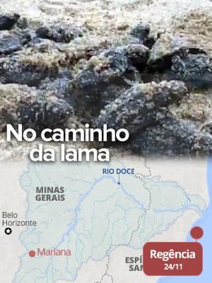 VÍDEO: tartarugas são resgatadas  e levadas para longe da lama no ES (Alexandre Nascimento/G1)