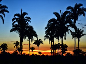 A flora do Tocantins tem diversas espécies de palmeiras e coqueiros (Foto: Clóvis Cruvinel/Acervo Pessoal)
