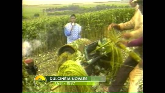 Relembre a importância e a queda da produção de rami no Paraná